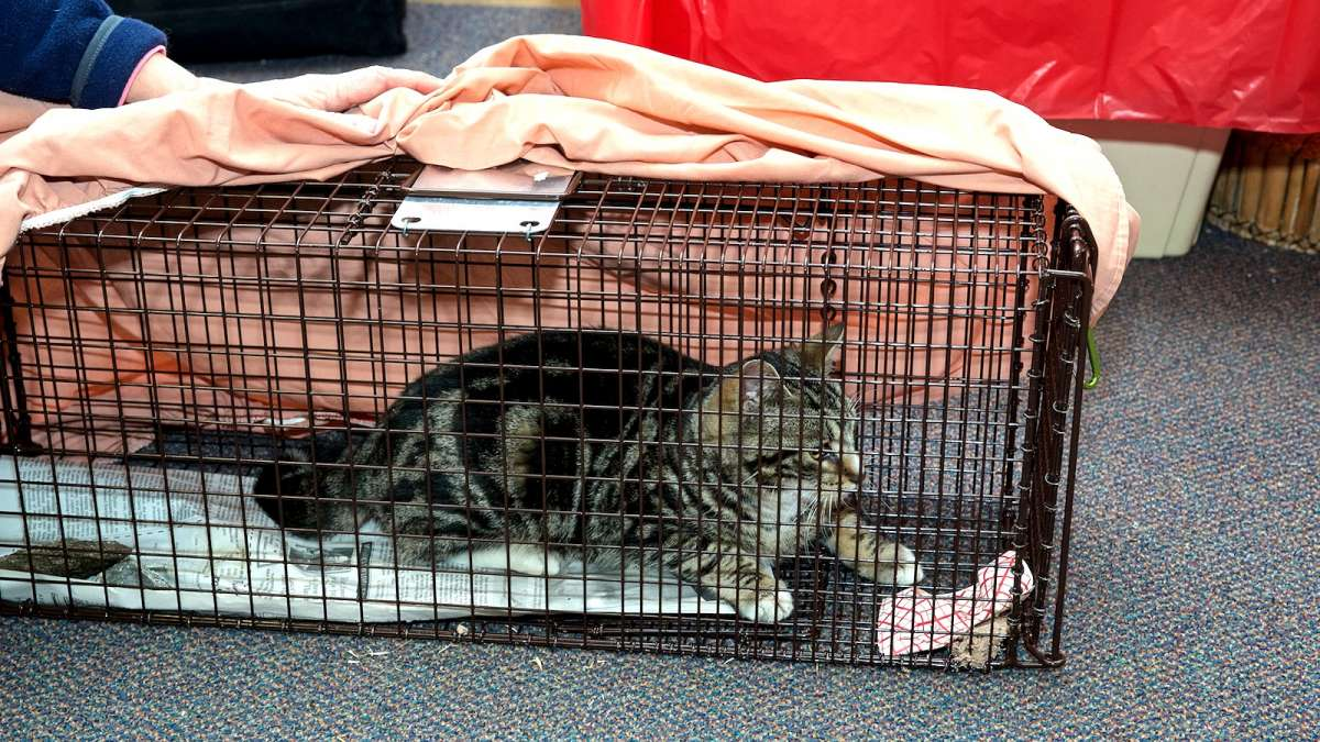 stray cats in philly get a helping hand with chestnut hill