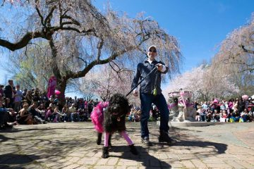 The Prettiest Pet in Pink Parade is one of the Sakura Sunday events during the 20th Annual Subaru Cherry Blossom Festival in Fairmount Park.