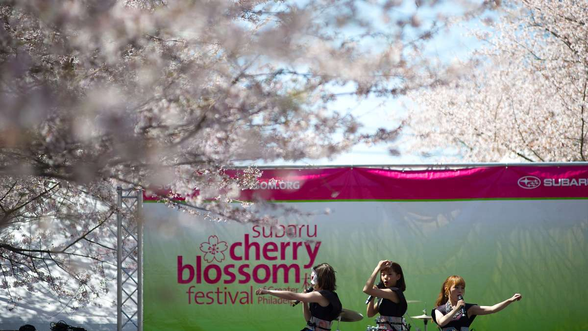 Thousands celebrate Japanese culture under picture-perfect weather conditions during the 20th annual Cherry Blossom Festival in Fairmount Park on Sunday.