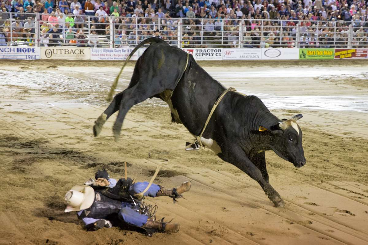 A bull kicks and throws a cowboy onto the sand at the Cowtown Rodeo. (Lindsay Lazarski/WHYY)
