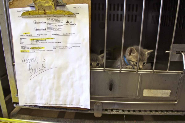 Three kittens share a cage with their mother at the Camden County Animal Shelter in Blackwood. Adult feral cats are unsuited for adoption and must be euthanized. The kittens can be adopted. (Emma Lee/for NewsWorks)