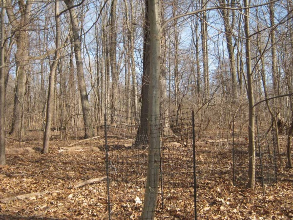 <p><p>An American Chestnut is protected by fencing to prevent it from contracting fungus through the wounds left by the antlers of running deer. (Alaina Mabaso/for NewsWorks)</p></p>