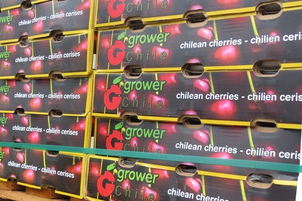 <p><p>Chile's harvest period is between late November and April, complementing North American consumer demand for fresh fruit during the winter months (Shirley Min/WHYY)</p></p>