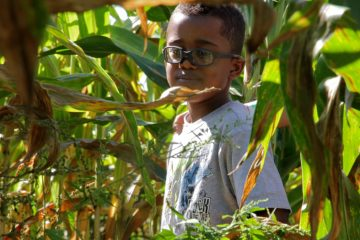 Christopher Ryan Ruffin of Philadelphia finds his way through the corn maze at Shady Brook Farm. (Emma Lee/for NewsWorks)