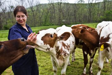 Rebecca Ruth Seidel with her dairy cows. (Kimberly Paynter/WHYY)