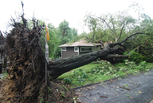 Heavy rains from Hurricane Irene uproot a tree in Edgemoor smashing into a home. (John Jankowski/For NewsWorks)