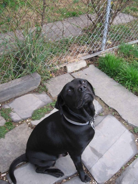 <p>&lt;p&gt;Police never found the person responsible for fatally shooting Mr. Dogg in his fenced-in yard in Roxborough in March. (Photo courtesy of the Gambone family)&lt;/p&gt;</p>
