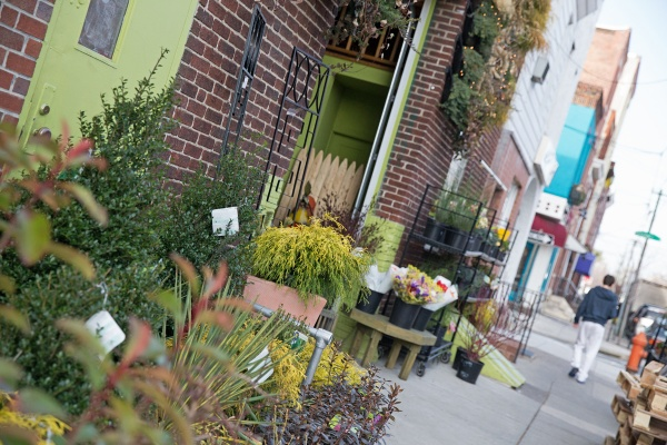 Urban Jungle specializes in urban landscaping and vertical gardens and green walls. (Lindsay Lazarski/WHYY)
