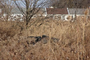 Houses on 86th Street in Eastwick overlook wetlands littered with a pile of old tires. (Emma Lee/for NewsWorks)