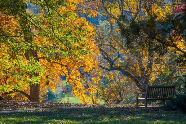 <p><p>A bench with a view at the Morris Arboretum. (Howard Pitkow/for Newsworks)</p></p>