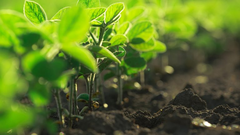 New Castle County will contribute $500,000 to Delaware's farmland preservation program to save properties from development. https://www.bigstockphoto.com/image-132409307/stock-photo-young-soybean-plants-growing-in-cultivated-field-soybean-rows-in-agricultural-field-in-sunset-selective-focus