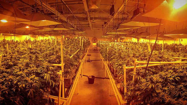Inside the Garden State Dispensary 'grow' in Woodbridge, New Jersey. (Provided by Franklin Labs, LLC.)
