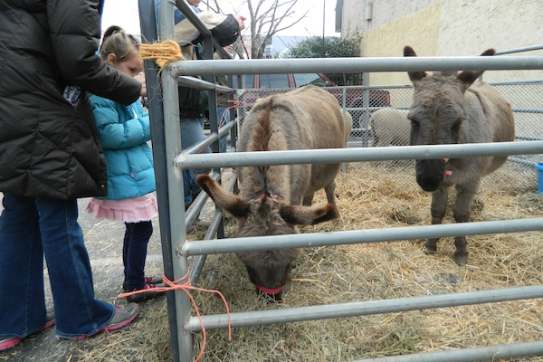 <p>&lt;p&gt;Outside of the Chelten Avenue church was a manger scene complete with live animals. (Kiera Smalls/for NewsWorks)&lt;/p&gt;</p>