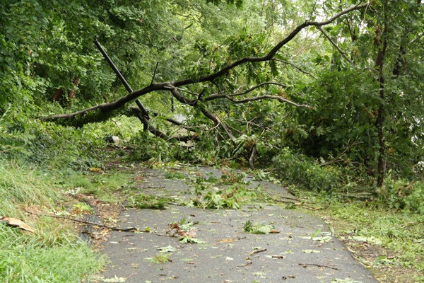 A downed tree blocks the path along Crystal Lake Park in Haddon Township New Jersey following Hurricane Irene.