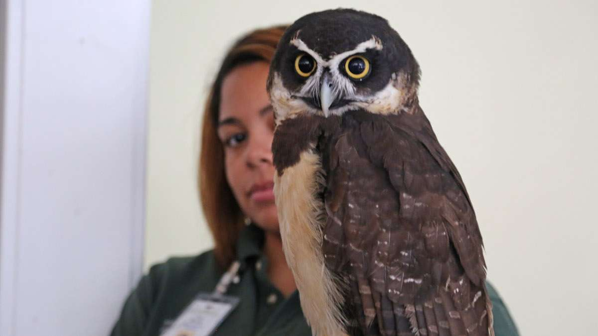 Live owls from Philadelphia Zoo were on sight at the Harry Potter Festival (Natavan Werbock/for NewsWorks)