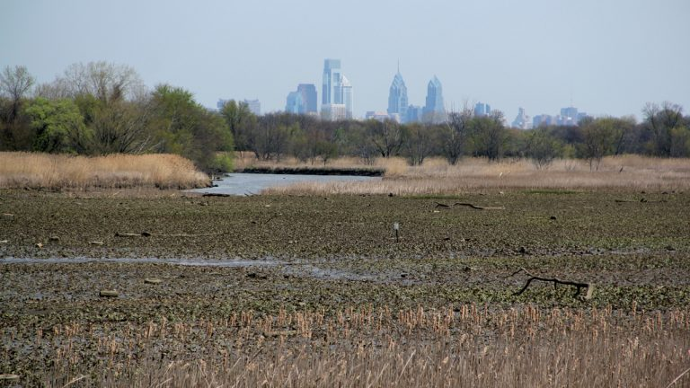 The John Heinz National Wildlife Refuge at Tinicum is less than 10 miles from center city. (Emma Lee/for NewsWorks)