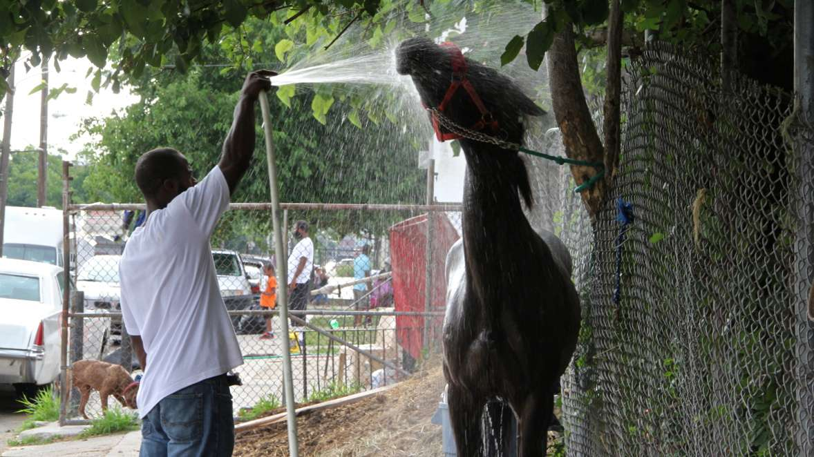 A horse gets a cooling bath outside the stables on Fletcher Street. (Emma Lee/WHYY)