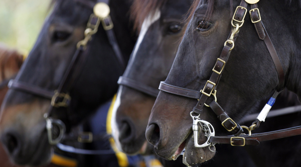 Pa. State Police looking for some four-footed troopers (Matt Rourke/AP Photo, file)