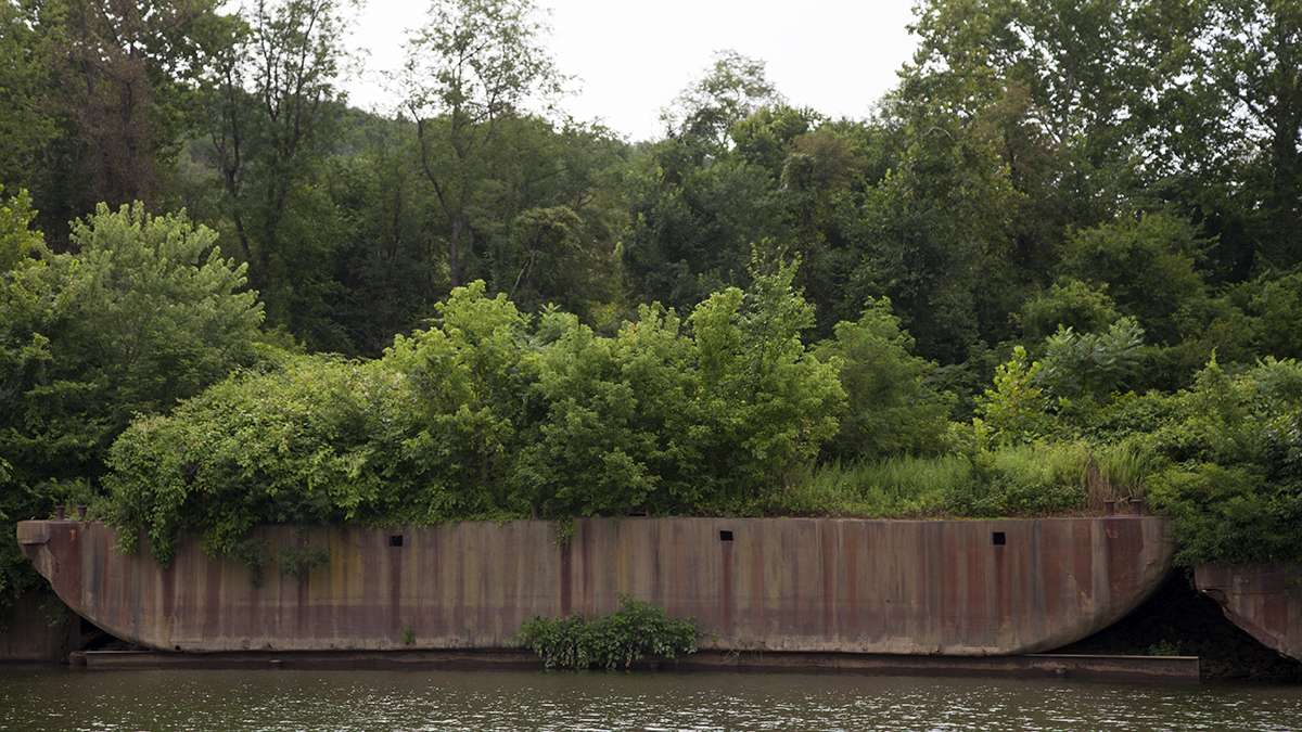Abandoned barges can be found along the banks of Pittsburgh's rivers. Some of them have been repurposed as boat launches or coastline, but some, like this one, are covered in vegetation. (Irina Zhorov/WESA)