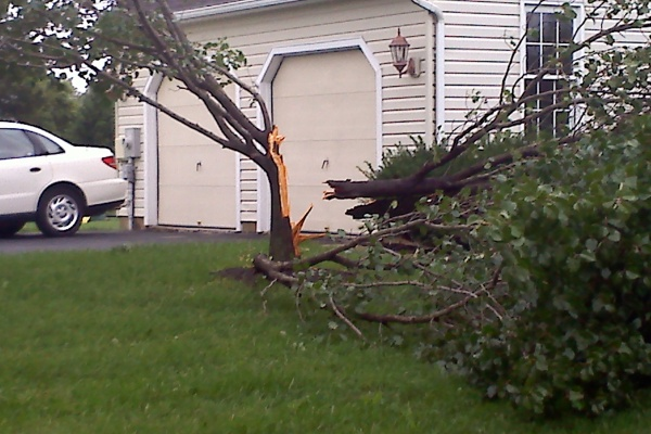 Irene's winds and rain severs a tree in half in Middletown, Del. (Sean McEvoy/For NewsWorks)