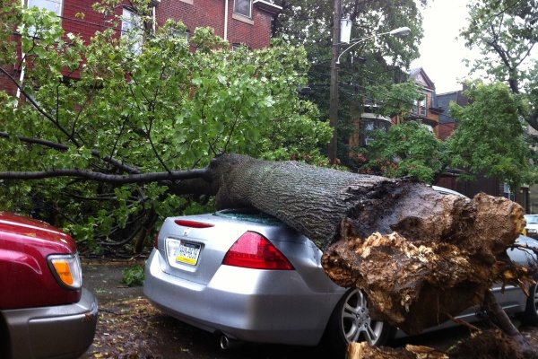 A large tree fell onto a car Saturday night as Hurricane Irene ripped through this Philadelphia nieghborhood, on the 4500 block of Osage Avenue. (John Meyers/For NewsWorks)