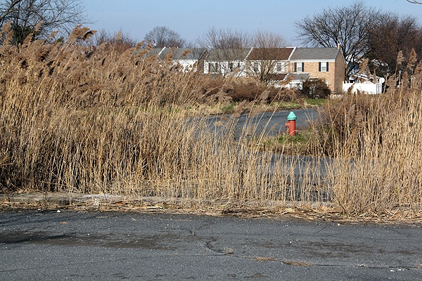 <p>The land between 86th Street and the John Heinz Wildlife Refuge is zoned single-family residential, but Korman has proposed a 722-unit apartment complex. (Emma Lee/for NewsWorks)</p>