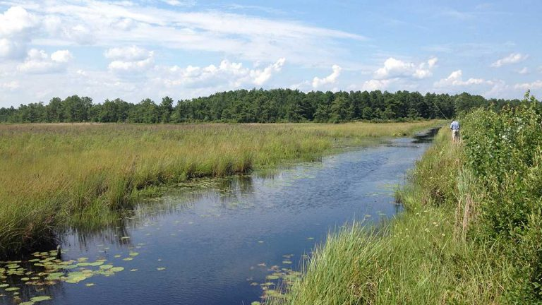Parker Preserve area in the Pinelands. (Photo courtesy of Pinelands Preservation Alliance)