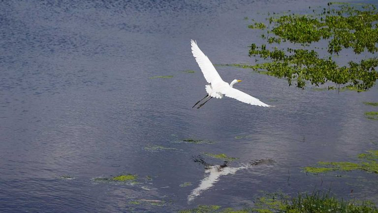 A bird flies over the pond at the Cape May Bird Sanctuary. (Photo courtesy of Evelyn Tu/for NewsWorks)