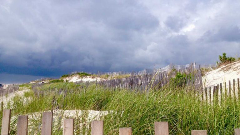 A South Seaside Park dune in 2015. (Justin Auciello for NewsWorks)