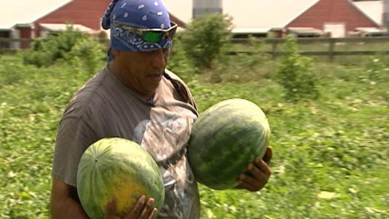 Francisco Galindo is grateful that for the federal migrant education program that his children attend while he and their mother work on watermelon farms near Laurel. (Dan Rosenthal/WHYY)