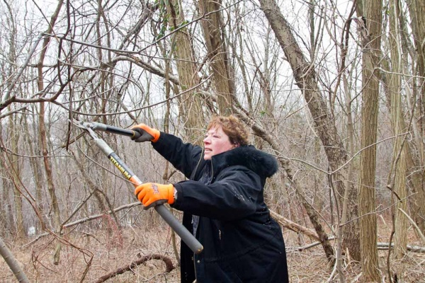 <p>&lt;p&gt;Marlene Schleifer trims branches at Germany Hill in Manayunk during Ivy Ridge Green's Martin Luther King Day cleanups. (Brad Larrison/For NewsWorks)&lt;/p&gt;</p>