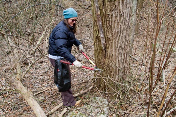 <p>&lt;p&gt;Mary Schmitt clears vines and invasive plants at Germany Hill in Manayunk during Ivy Ridge Green's Martin Luther King Day cleanups. (Brad Larrison/For NewsWorks)&lt;/p&gt;</p>