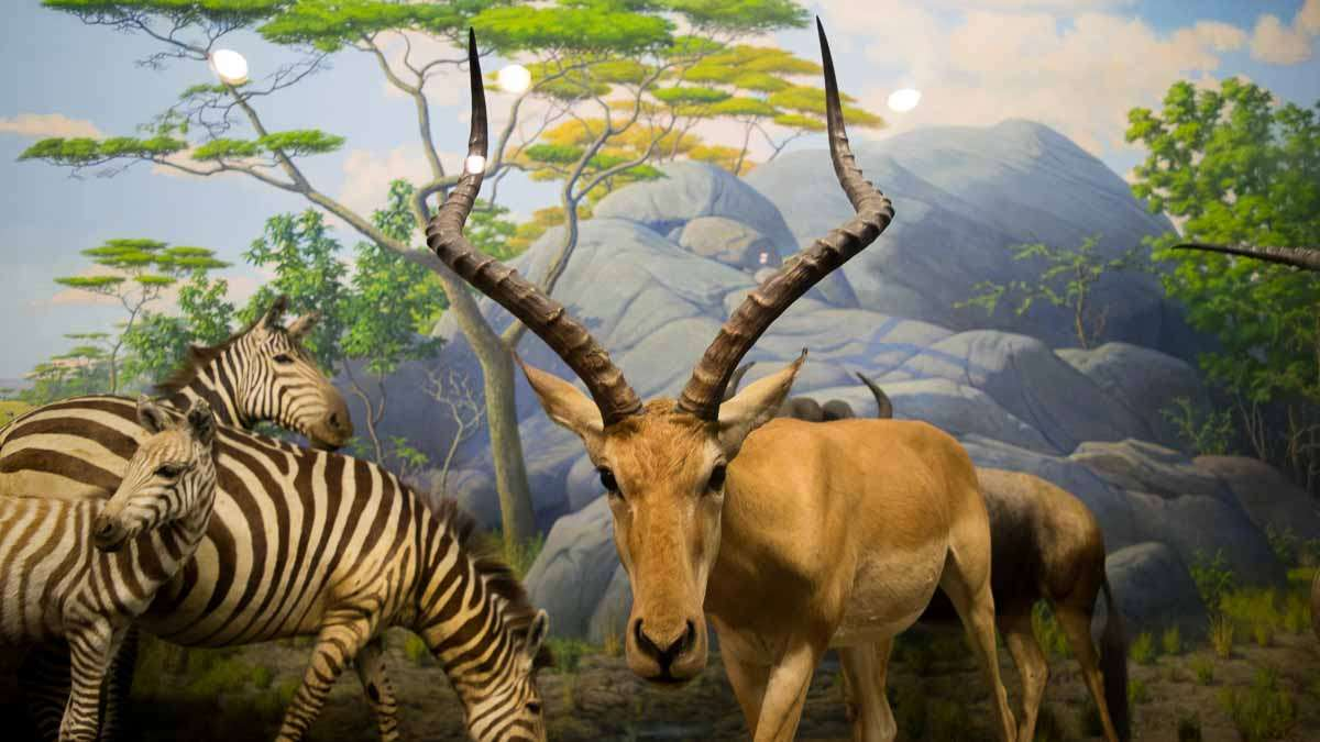 One of the dioramas at the Academy of Natural Sciences of Drexel University in Philadelphia. (Paige Pfleger/WHYY)