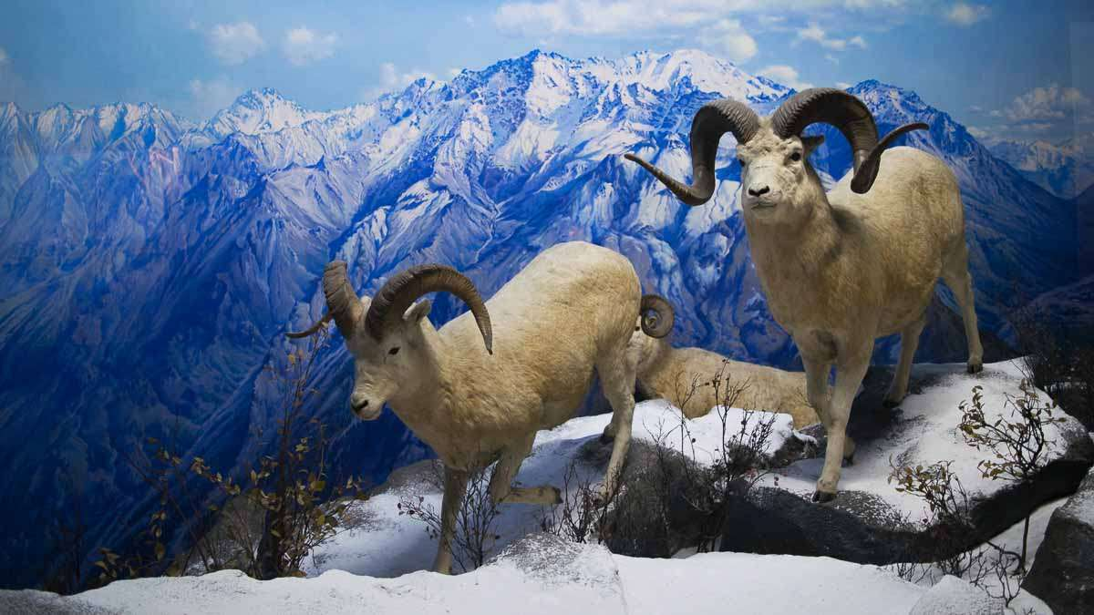 The scenery in the dioramas at the Academy of Natural Sciences of Drexel University in Philadelphia were painted to be exact replicas of a real place. (Paige Pfleger/WHYY)
