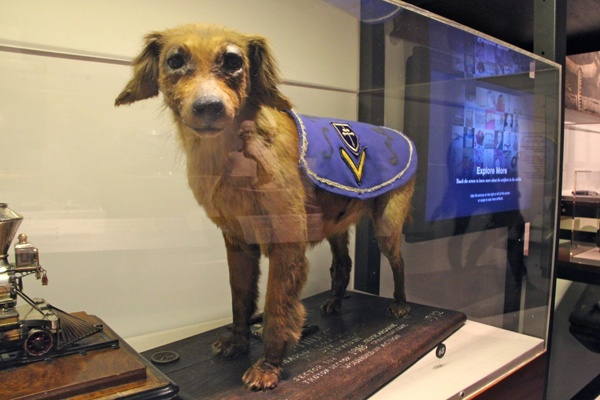 "Displayed at the Philadelphia History Museum, this pup earned two Purple Hearts during World War I as the mascot of the 315th Infantry (""Philadelphia's Own"") in France (WHYY, file)"