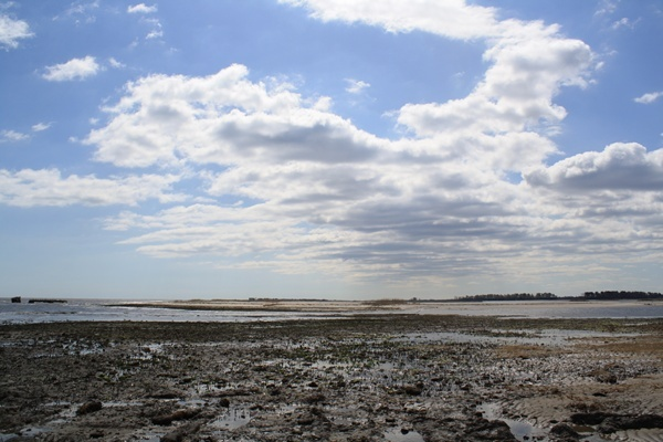 <p><p>Water from the Delaware Bay flows past what used to be sand dunes at Fowler Beach.  The salt water is changing the make up of the refuge. (Mark Eichmann/WHYY)</p></p>