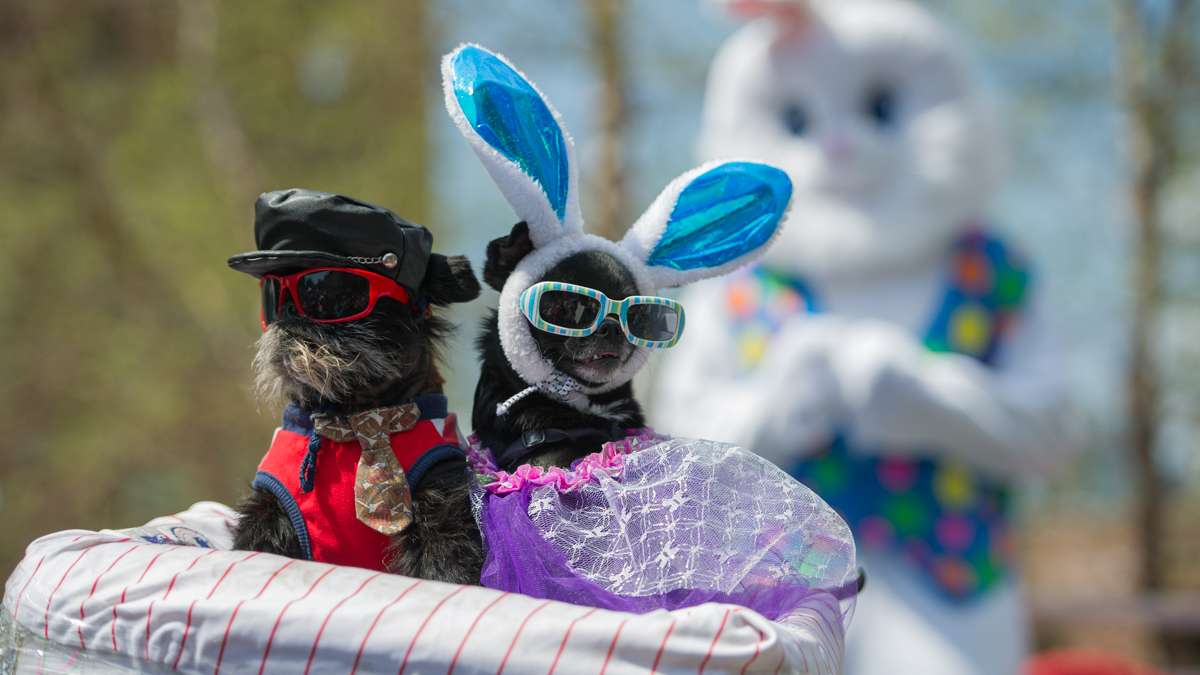 From left: Noodle and Diva, owned by Anthony Smith, won the best-dressed pet category.