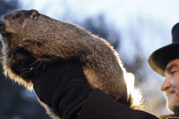 Groundhog Club co-handler John Griffiths holds Punxsutawney Phil during the annual celebration of Groundhog Day on Gobbler's Knob in Punxsutawney, Pa., Tuesday, Feb. 2, 2016. The handlers say the furry rodent has failed to see his shadow, meaning he's