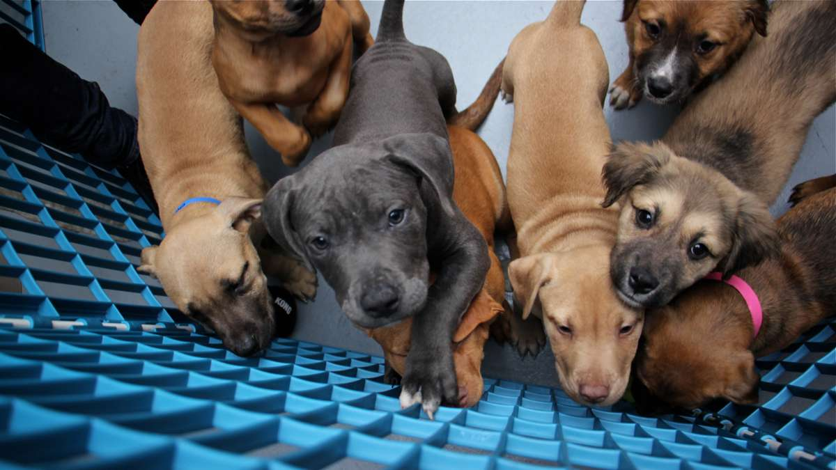 Fourteen puppies were adopted from Morris Animal Refuge during an event sponsored by Animal Planet with the help of some Philadelphia Eagles players.