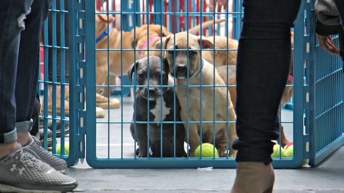 Puppies look longingly from their enclosure during an adoption event at Morris Animal Refuge. Fourteen puppies found permanent homes.