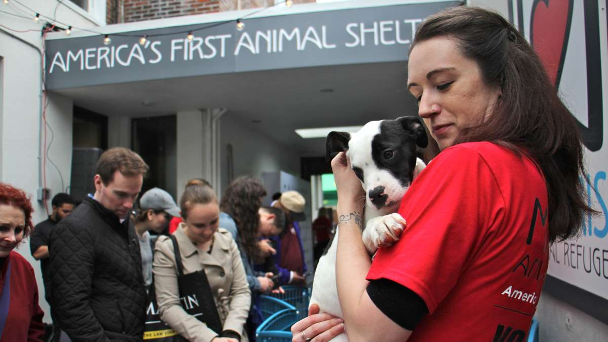 Morris Animal Refuge volunteer Nicole Minium calms a puppy during the shelter's ''Puppy Draft'' adoption event.