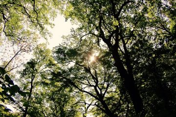 'I looked up at a canopy of leaves and saw not the leaves but the light filtering through them.' (Image courtesy of Rachel Swenarton)