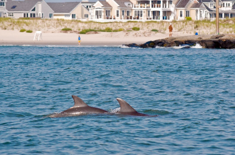 Dolphins passing by Avalon in August 2010. (Photo: Marc Cappelletti via Flickr)