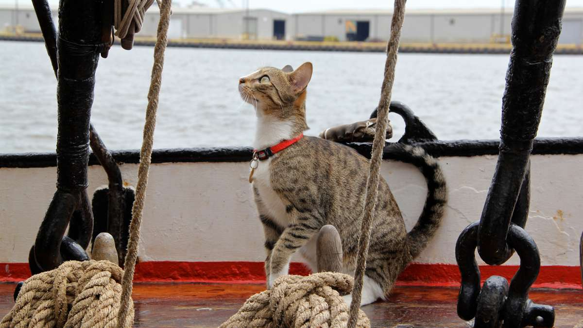 The ship's cat makes a brief appearance above decks. (Emma Lee/WHYY)