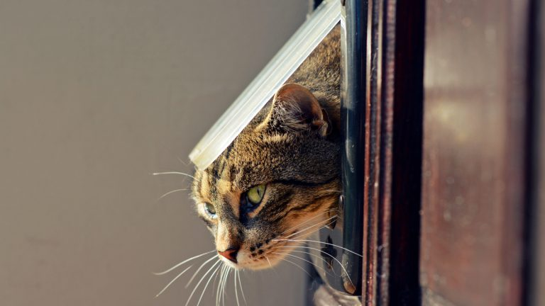 (<a href='http://www.shutterstock.com/pic-231008230/stock-photo-cat-crawls-out-of-the-house-through-a-hole.html?src=pp-photo-231008236-3&ws=1'>Car exiting through door</a> image courtesy of Shutterstock.com)