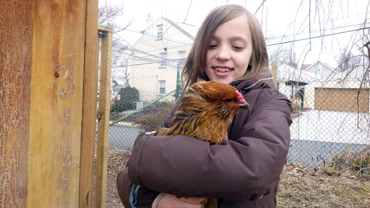 Marlena Marg-Bracken, 9, with Snuggles the chicken, who is blind in one eye and who lays beautiful bluish-green eggs. (Jennifer Lynn/WHYY)