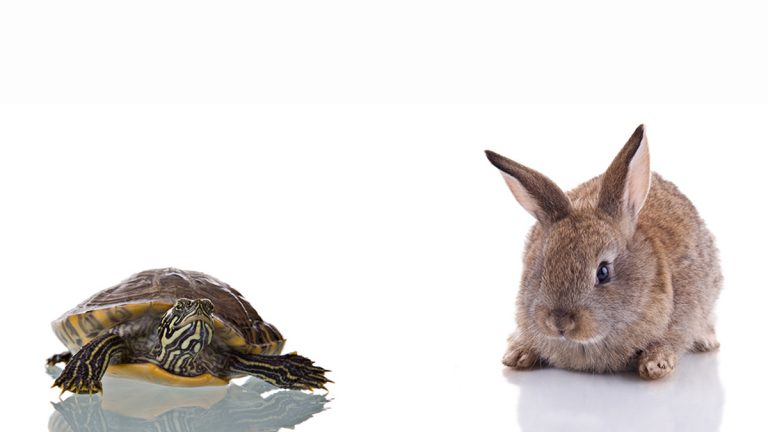 (<a href='https://www.bigstockphoto.com/image-3524484/stock-photo-bunny-and-turtle'>ajn</a>/Big Stock Photo)
