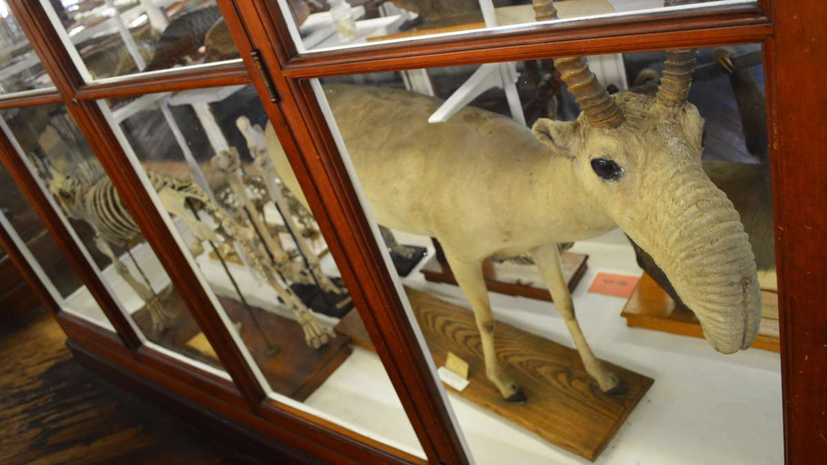The Wagner Institute's 19th century exhibit hall houses a collection of natural history specimens, including mounted birds and mammals, fossils, rocks, minerals, insects, shells, dinosaur bones and more. (Paige Pfleger/WHYY)