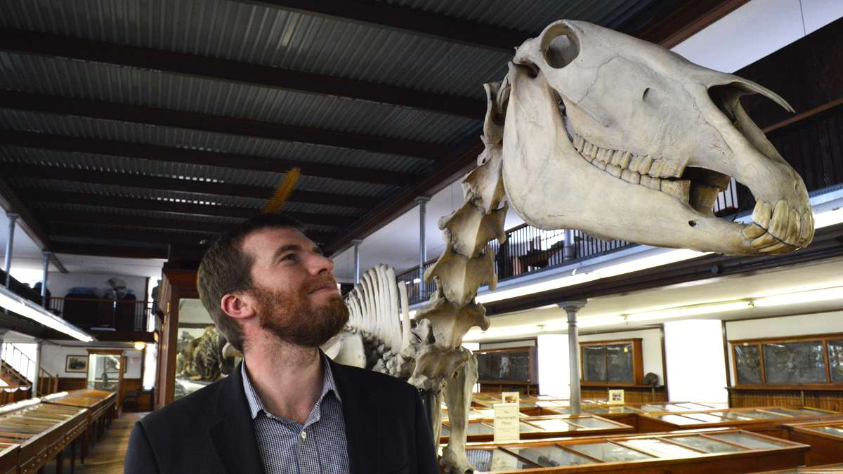 Kristofer Helgen, Curator of Mammals at the Smithsonian's National Museum of Natural History, has discovered new species in old museums. Here, he visits the Wagner Free Institute of Science. (Paige Pfleger/WHYY)