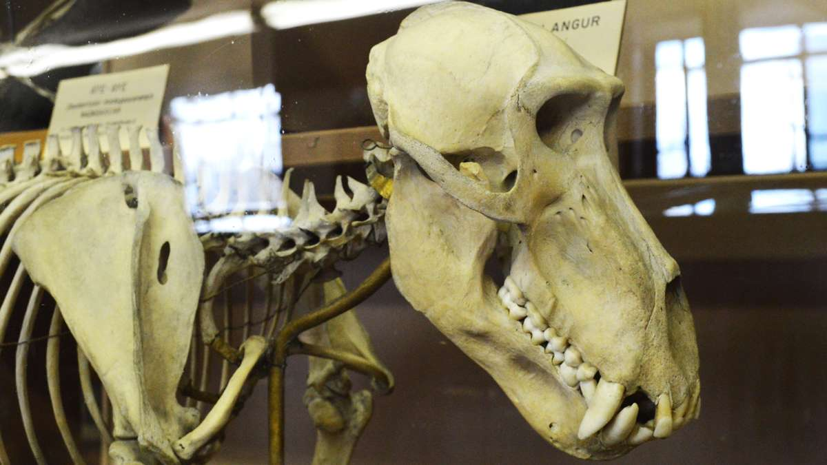 A specimen in the Wagner Free Institute of Science in Philadelphia. (Paige Pfleger/WHYY)